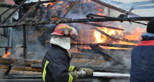 Incendiu Arbore (1)
